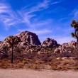Royalty-Free Stock Photo: Joshua Tree