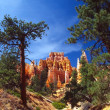 Bryce — Photo #1054376