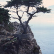 17 mile drive — Stock Photo