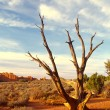 Arches NP — Stock Photo #1055014
