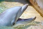 Delfín — Stock fotografie