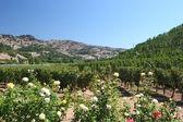 Napa winery — Stock Photo
