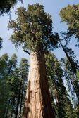 Sequoia National Park — Stock Photo
