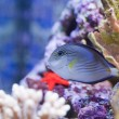 Marine aquarium fish tank - Stock Photo