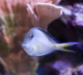 Marine aquarium fish tank — Stock Photo