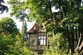 Old wooden house in the leafy forest — Stock Photo