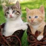 Kitten in boots — Stock Photo #1043584