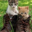 Royalty-Free Stock Photo: Pair of kittens in high shoes outdoor