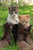 Pair of kittens in high shoes outdoor — Stock Photo