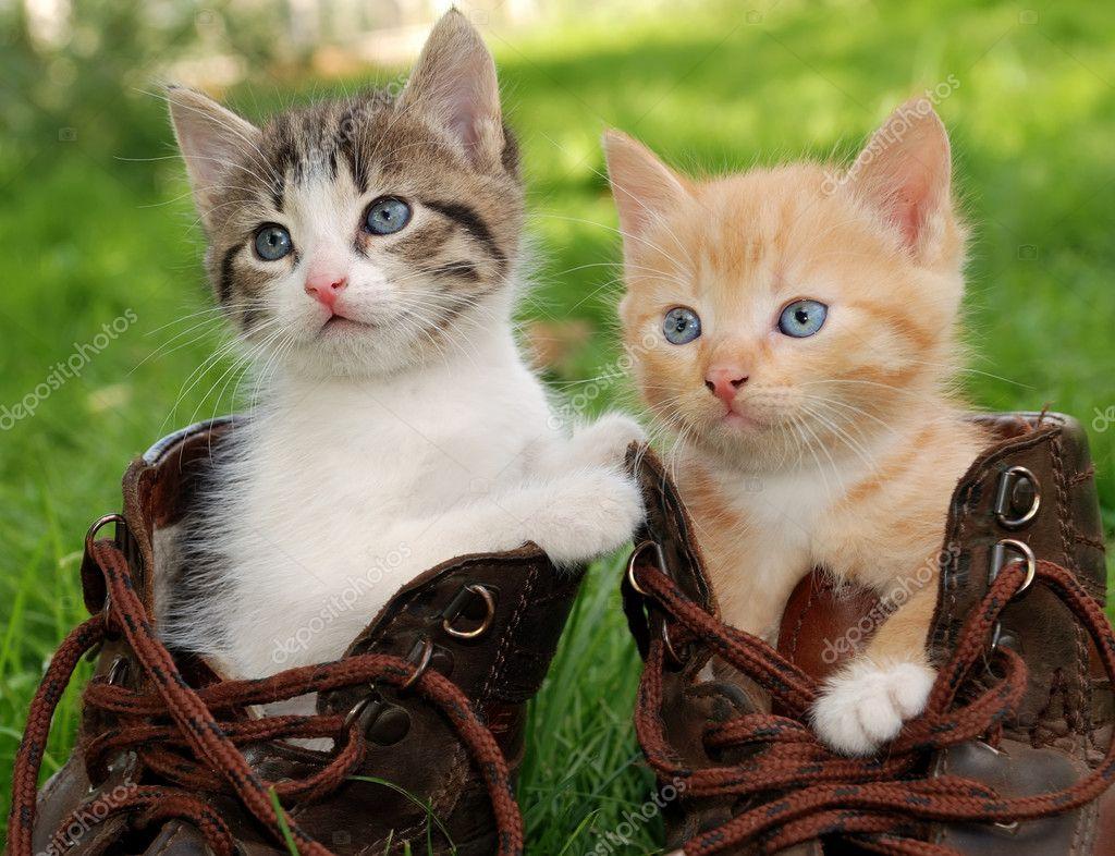 котенок в ботинке  № 2016535  скачать