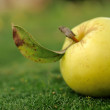 Yellow apple on green grass — Stock Photo