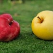 Pair of apples on green grass outdoors — Stock Photo