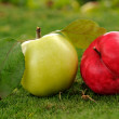 Pair of apples on green grass outdoors_2 — Stock Photo