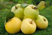 Heap of apples on green grass — Stock Photo