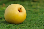 Yellow apple on green grass outdoors — Foto de Stock