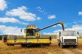 Combine harvester loading a truck in the — Stock Photo