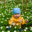 Baby in the middle of white flowers — Stock Photo