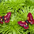 Two Butterfly On The Flowers — Stock Photo #1035326