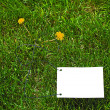 Clear white paper on grass - Stock Photo