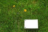 Cancellare il libro bianco sull'erba — Foto Stock