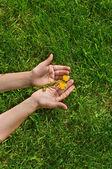 Manos sosteniendo flores — Foto de Stock