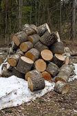 Stapel von firewoods — Stockfoto