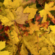 Yellow and red fall autumn foliage — Stock Photo