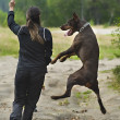 Stockfoto: Womwalking with dog