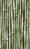Light green bamboo — Stock Photo