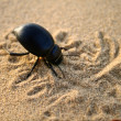 Stock Photo: Bug in sand