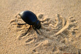 Bug in sand — Stock Photo