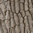 Bark — Stock Photo #1033257