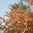 Tree flowers — Stockfoto