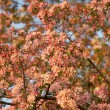 Tree flowers — Stock Photo #1041047