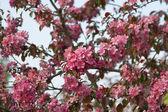 Tree flowers — Stock Photo