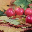 Four red apples on autumn leaves — Stock Photo #1051253