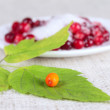 Sea-buckthorn berries on green sheet — Stock Photo #1082948