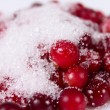 Stock Photo: Cowberry sprinkled with sugar