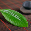 Leaf and stone — Stock Photo