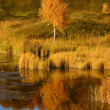 Autumn birch on river bank - Stock Photo