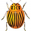 Colorado potato beetle — Stock Vector