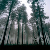 Woodland in winter — Stock Photo