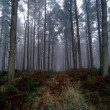 Stock Photo: Forest trees
