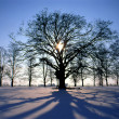 Stock Photo: Sunset in winter