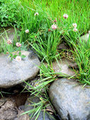 Stones and green grass — Stock Photo