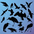 Stock Vector: Silhouettes of birds on turn blue