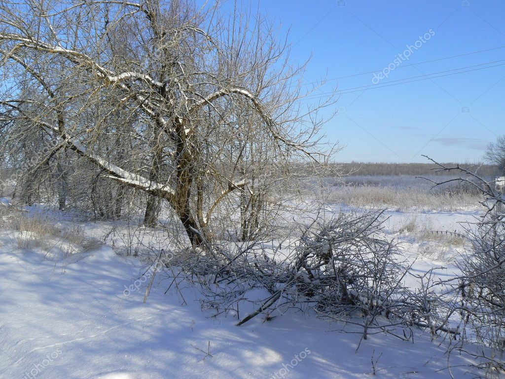 Winter landscape   Stock Photo #1150675