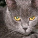 Serious cat — Stock Photo