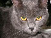严重的猫 — 图库照片