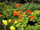Colorful flower bed — Stock Photo
